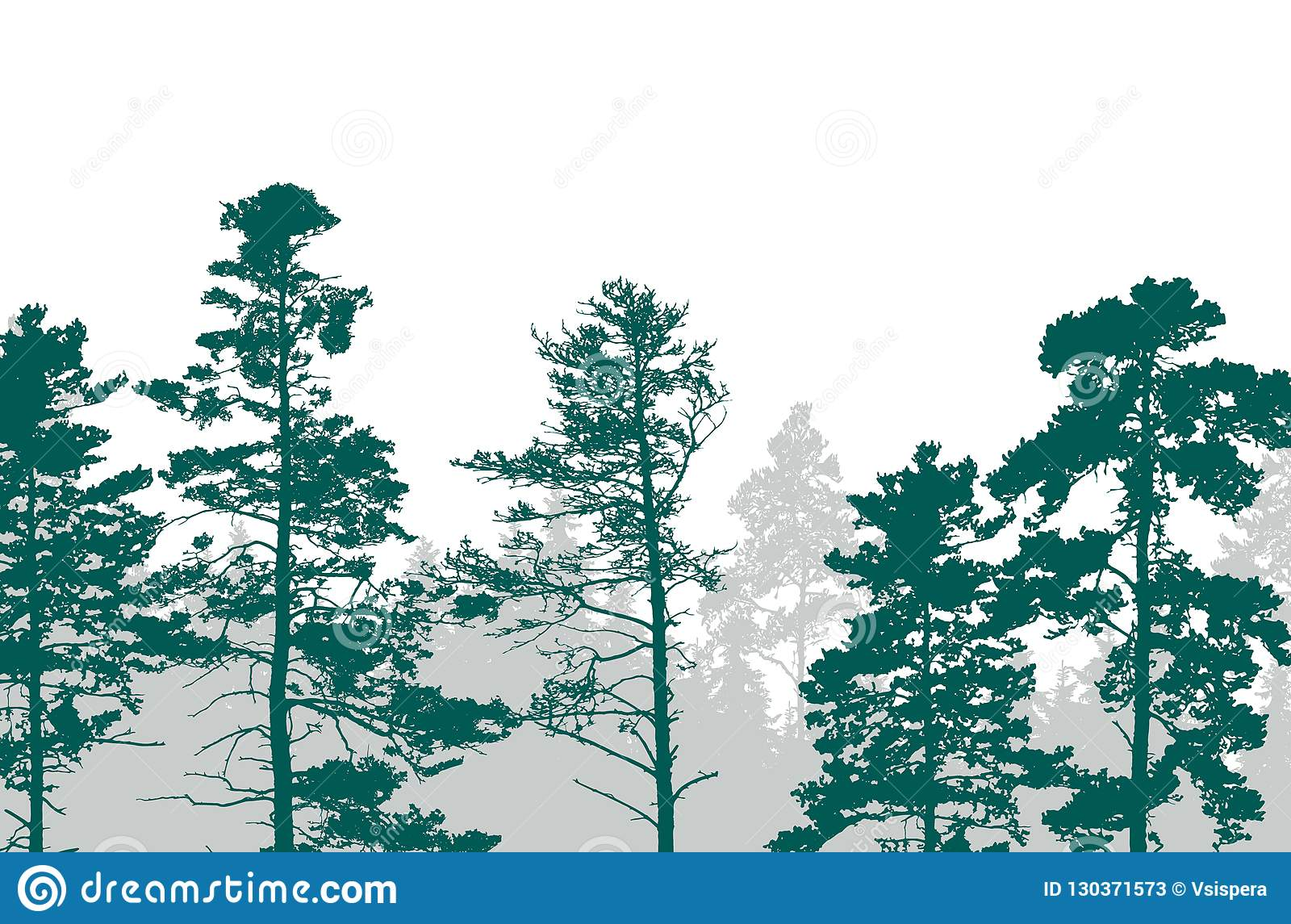 Realistic illustration of a green forest with coniferous trees w