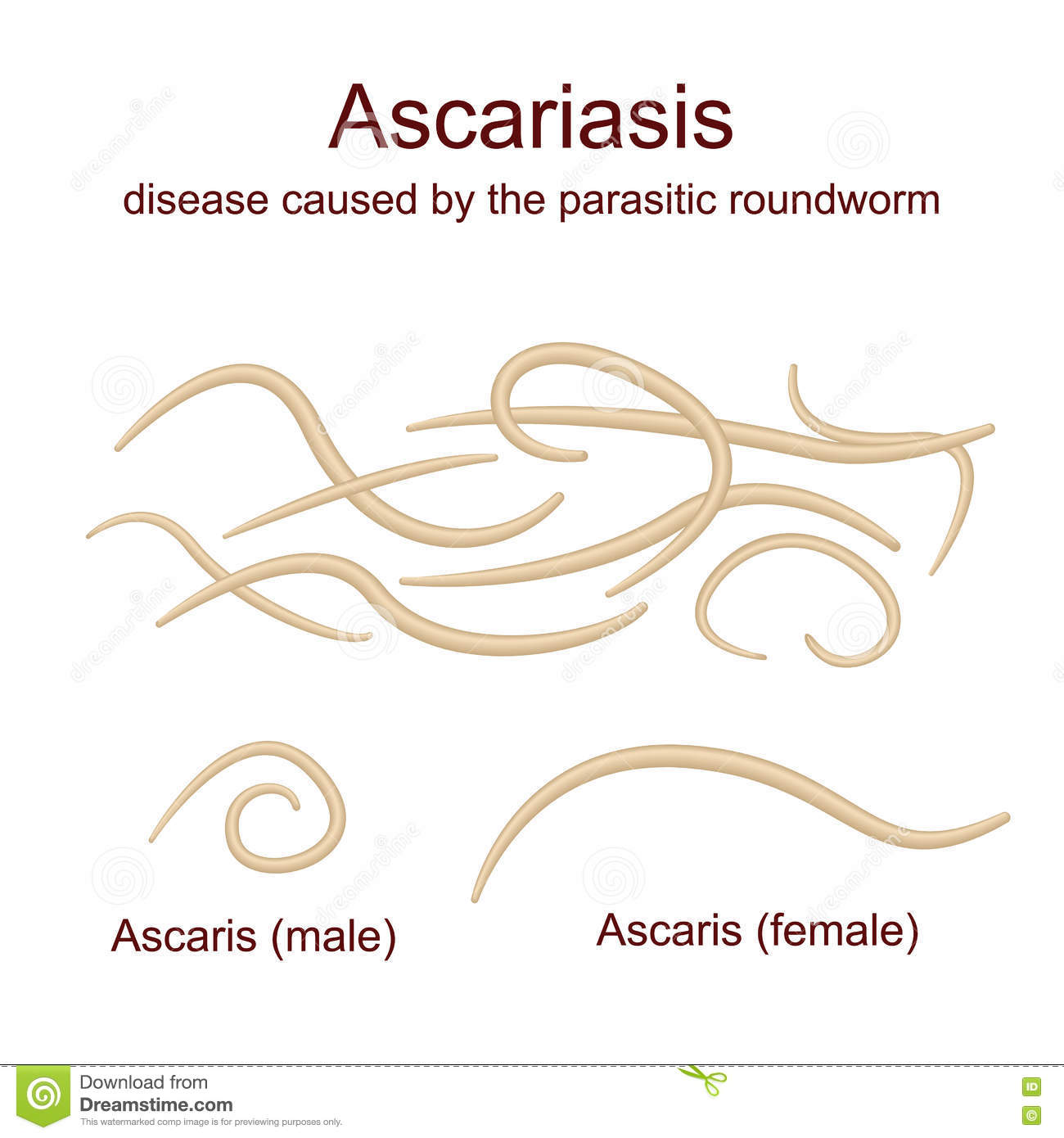 Ascariasis Cartoons, Illustrations & Vector Stock Images