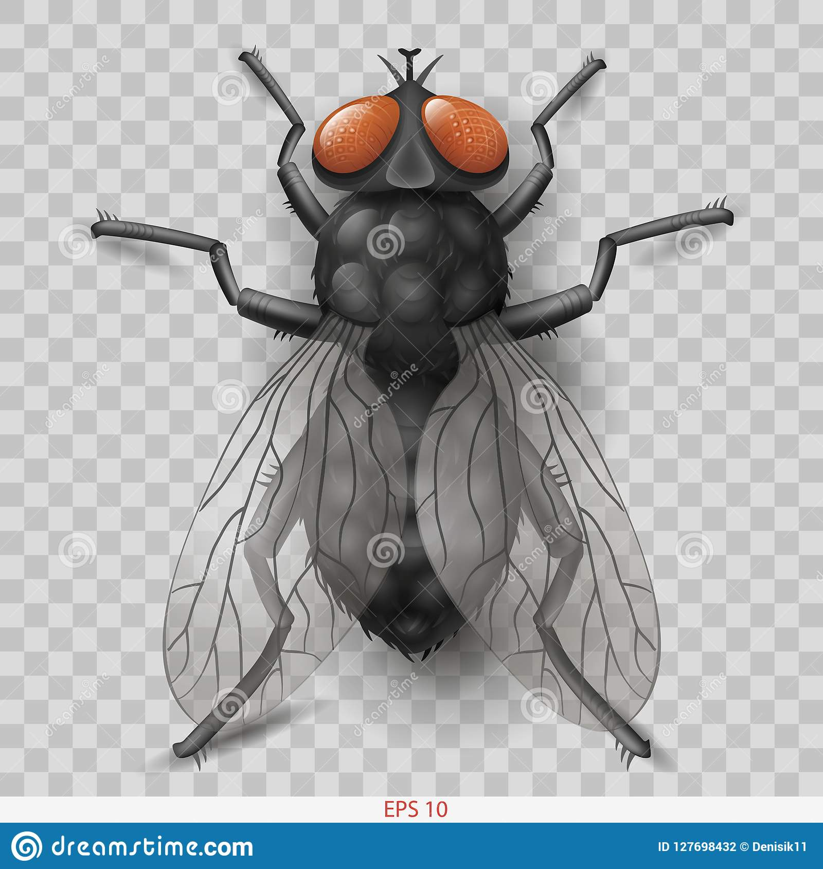 Realistic insect fly in vector insect fly