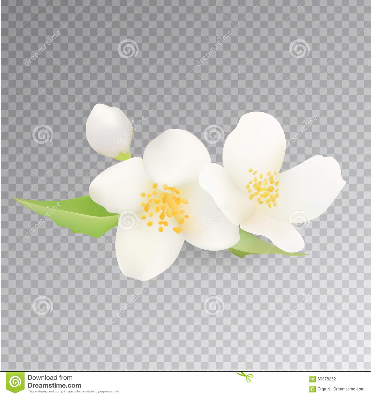 Realistic Jasmine Flower Icon On Transparent Background Vector