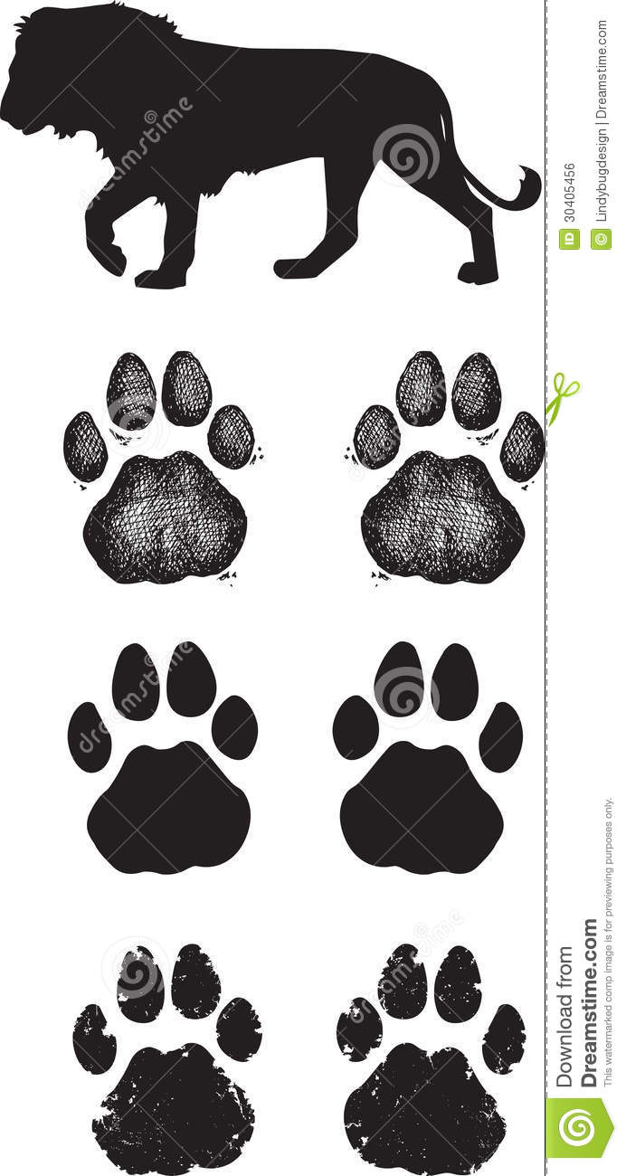 Realistic lion tracks or African Lion Footprints
