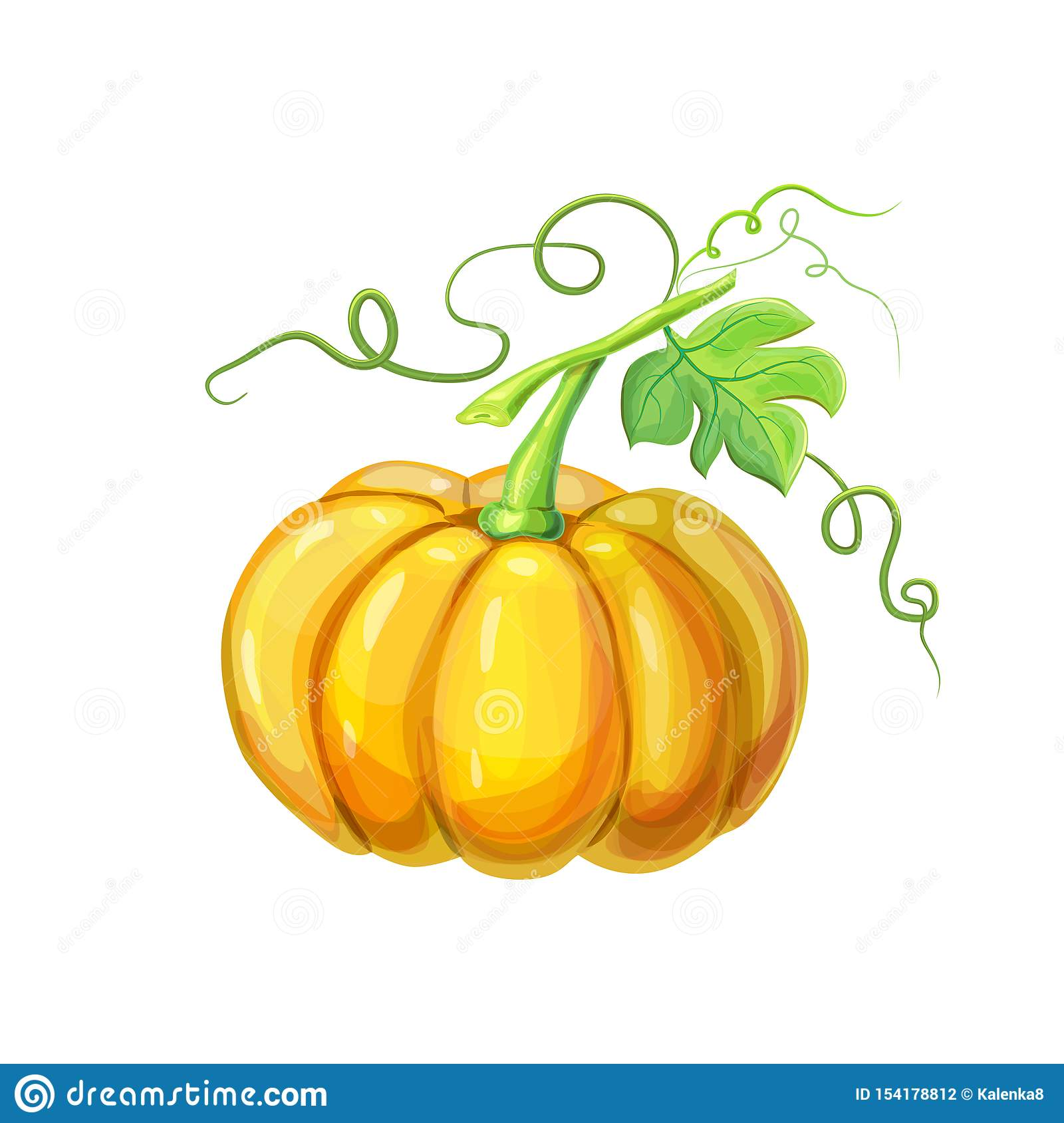 Realistic Orange Big Ripe Pumpkin With Stem Green Leaves And Curly Tendrils Isolated On White Beautiful Hand Drawn Stock Vector Illustration Of Natural Agriculture 154178812
