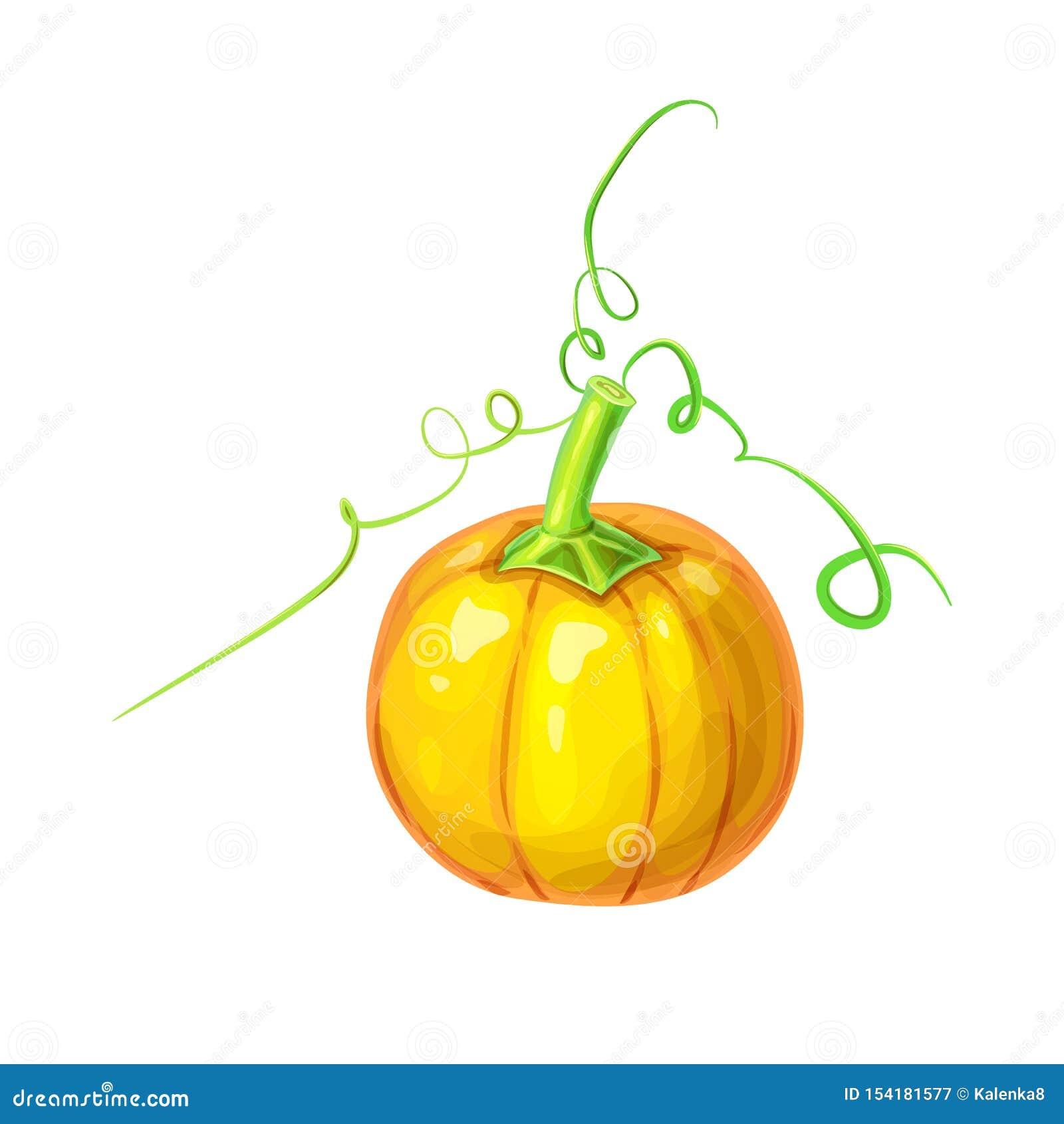 Curly Pumpkin Stem Stock Illustrations 54 Curly Pumpkin Stem Stock Illustrations Vectors Clipart Dreamstime