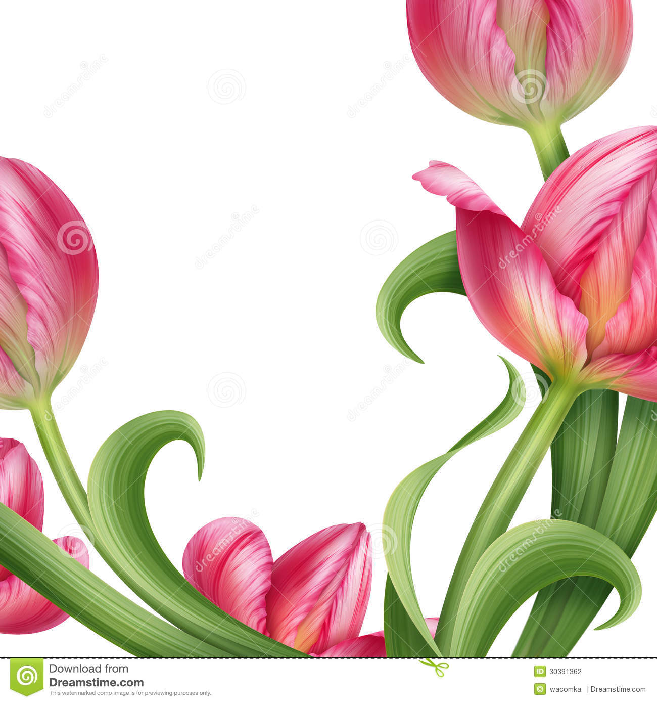 Realistic Pink Tulips Floral Illustration Stock ...