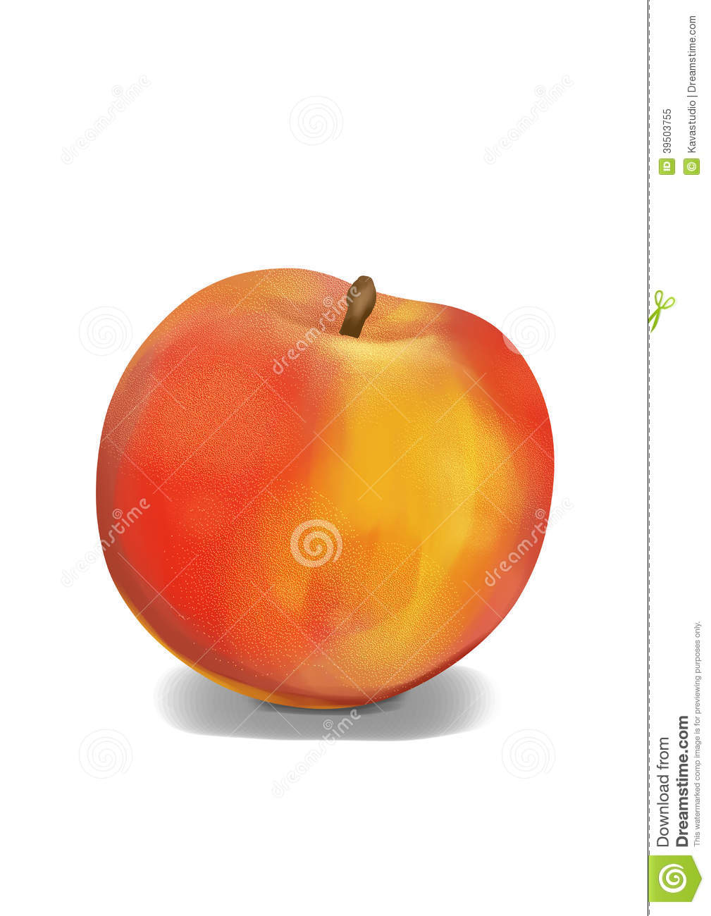 Realistic, plain peach illustration, front of one fruit