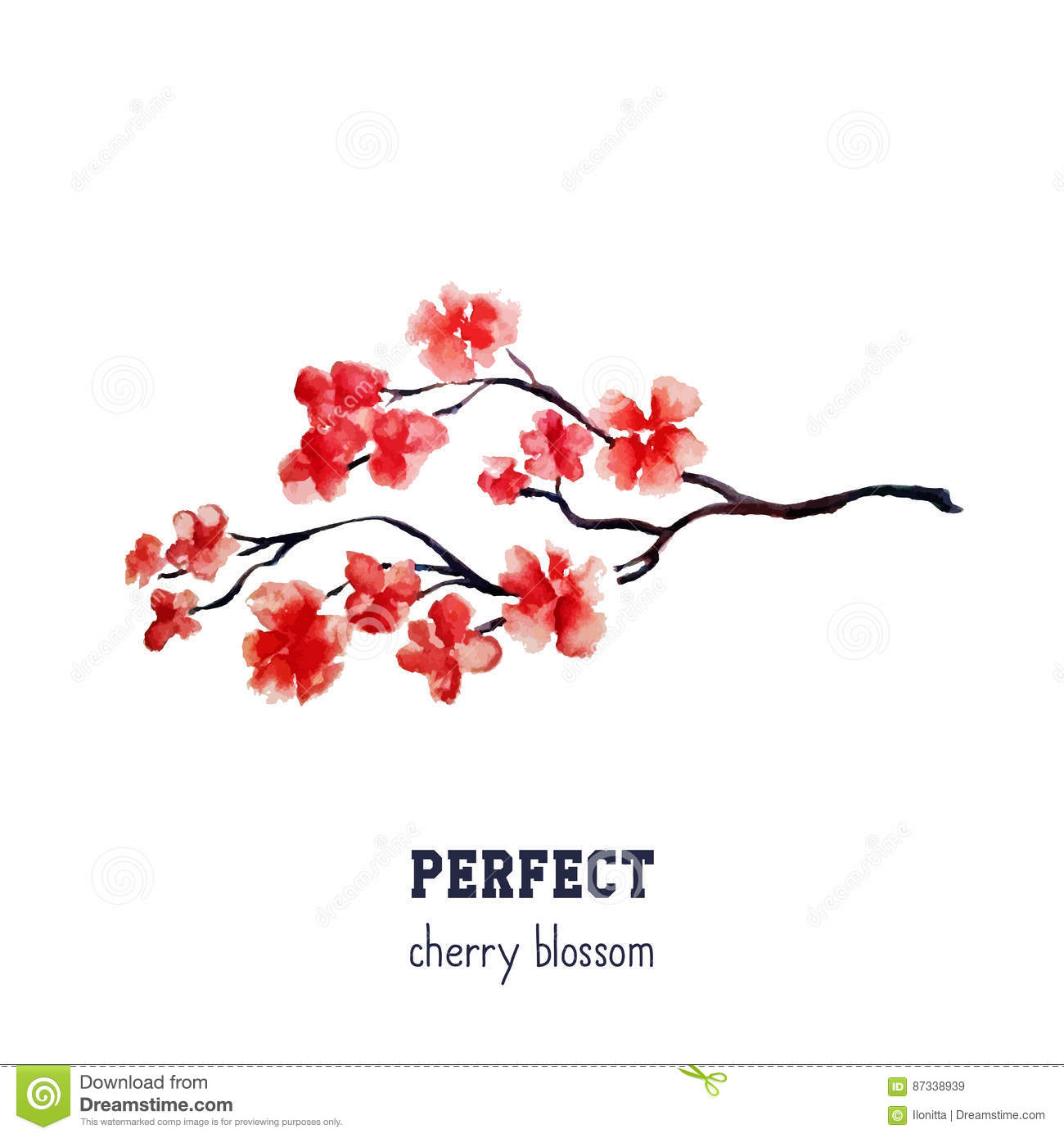Realistic red sakura blossom - Japanese red cherry tree isolated on white background.