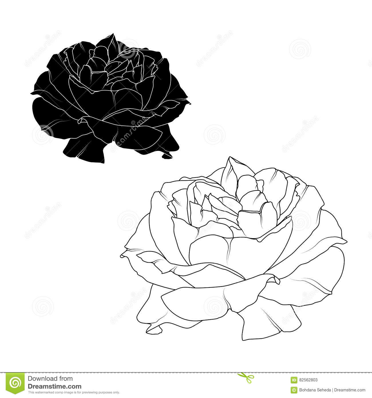 realistic rose flower bloom black white isolated stock