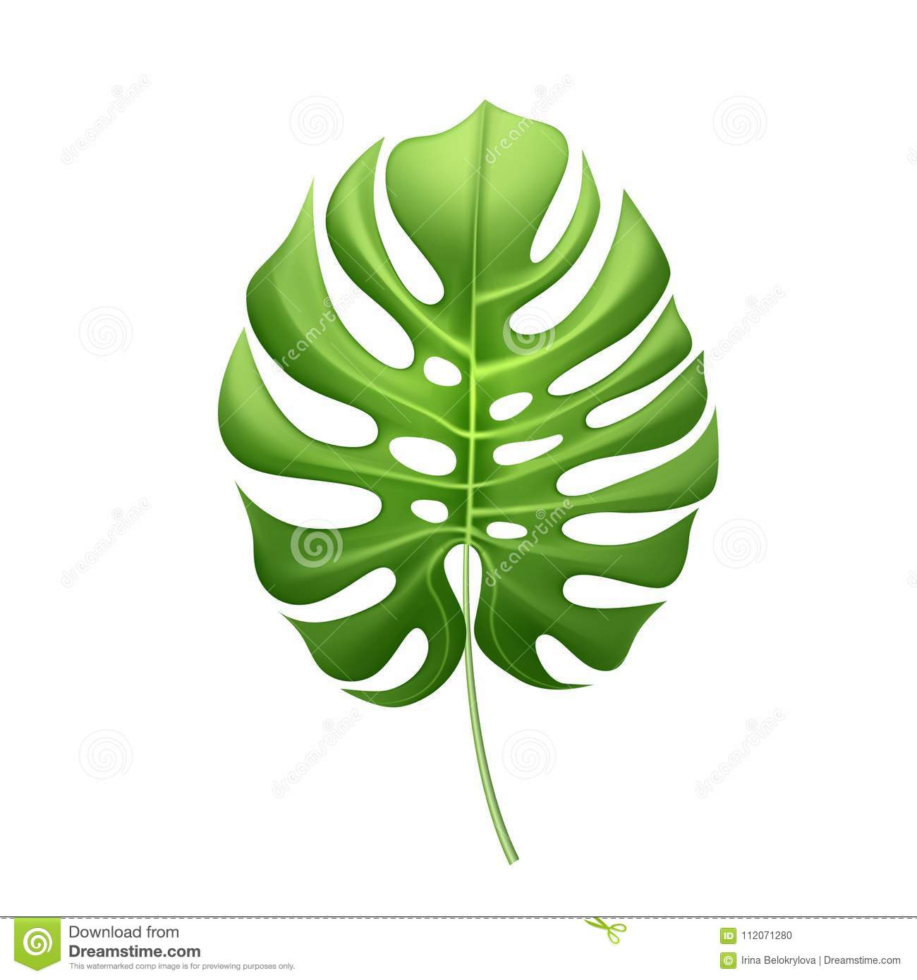 vector realistic tropical leaves exotic vacation stock vector