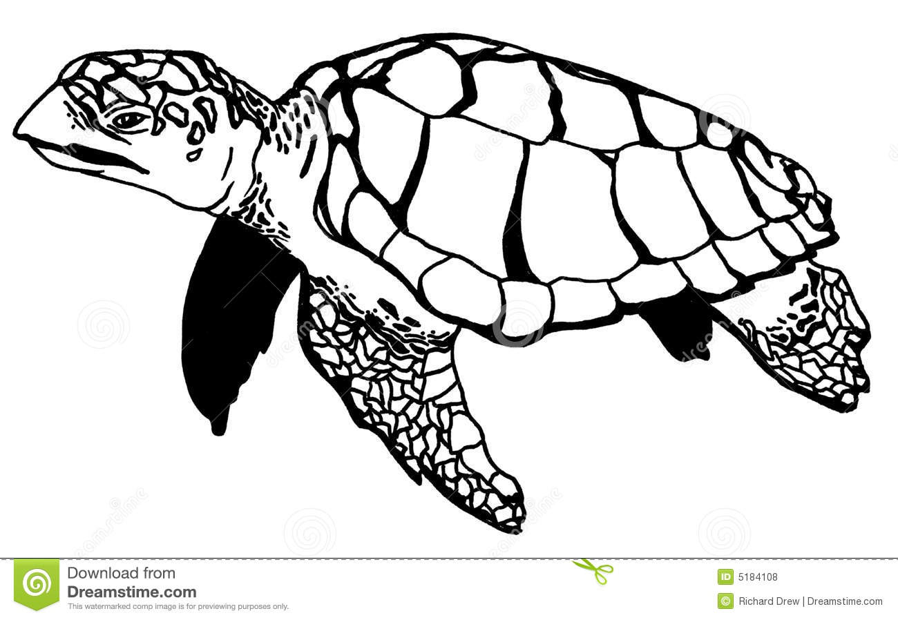 Realistic Turtle Illustraction Royalty Free Stock Photos Image 5184108