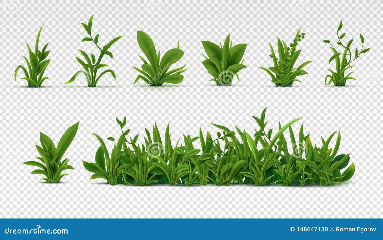 Realistisch groen gras 3D verse de lenteinstallaties, verschillende kruiden en struiken voor affiches en reclame Beeldverhaal pol