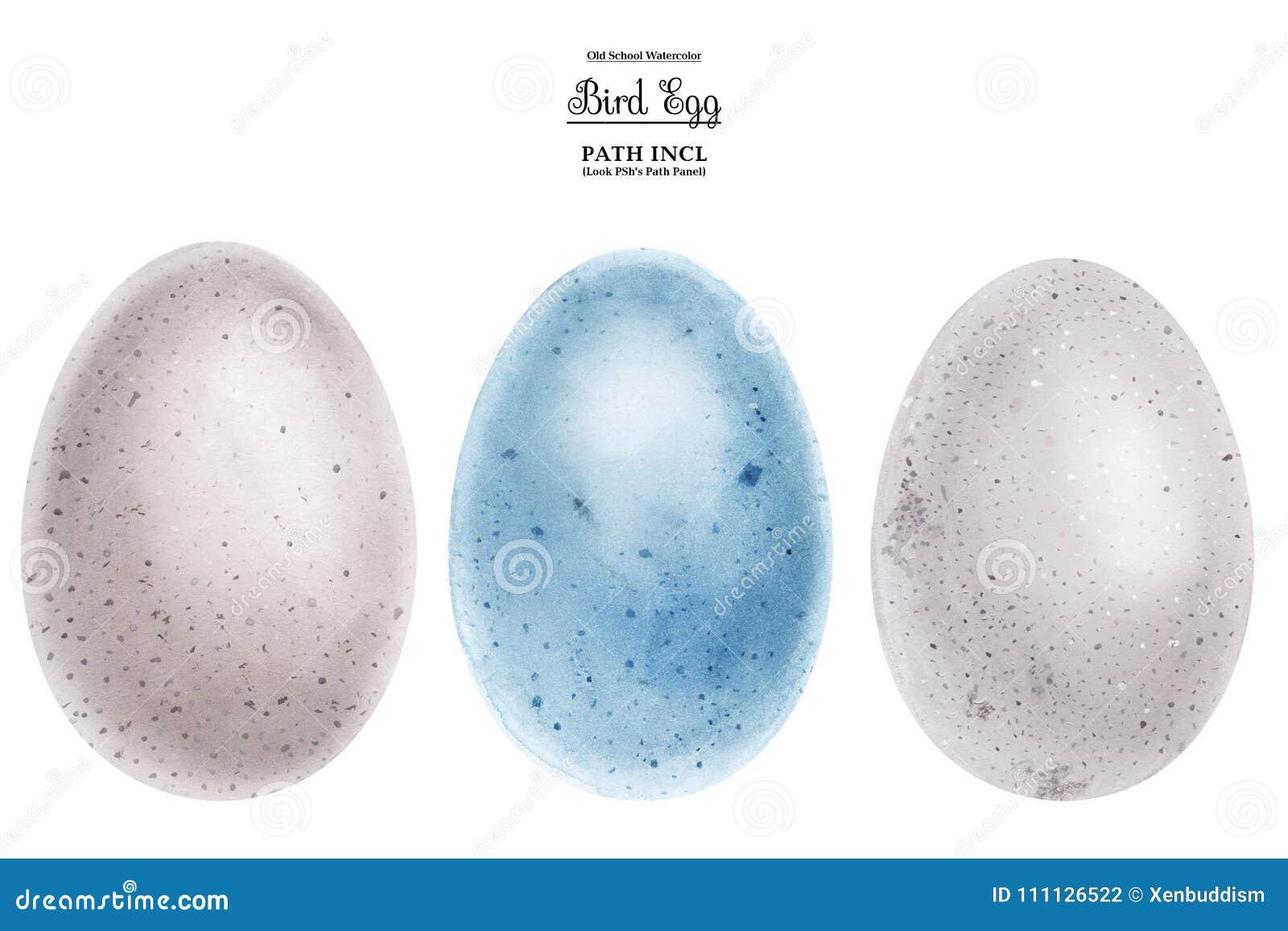 Realistische Aquarellillustration Eier Stock Abbildung