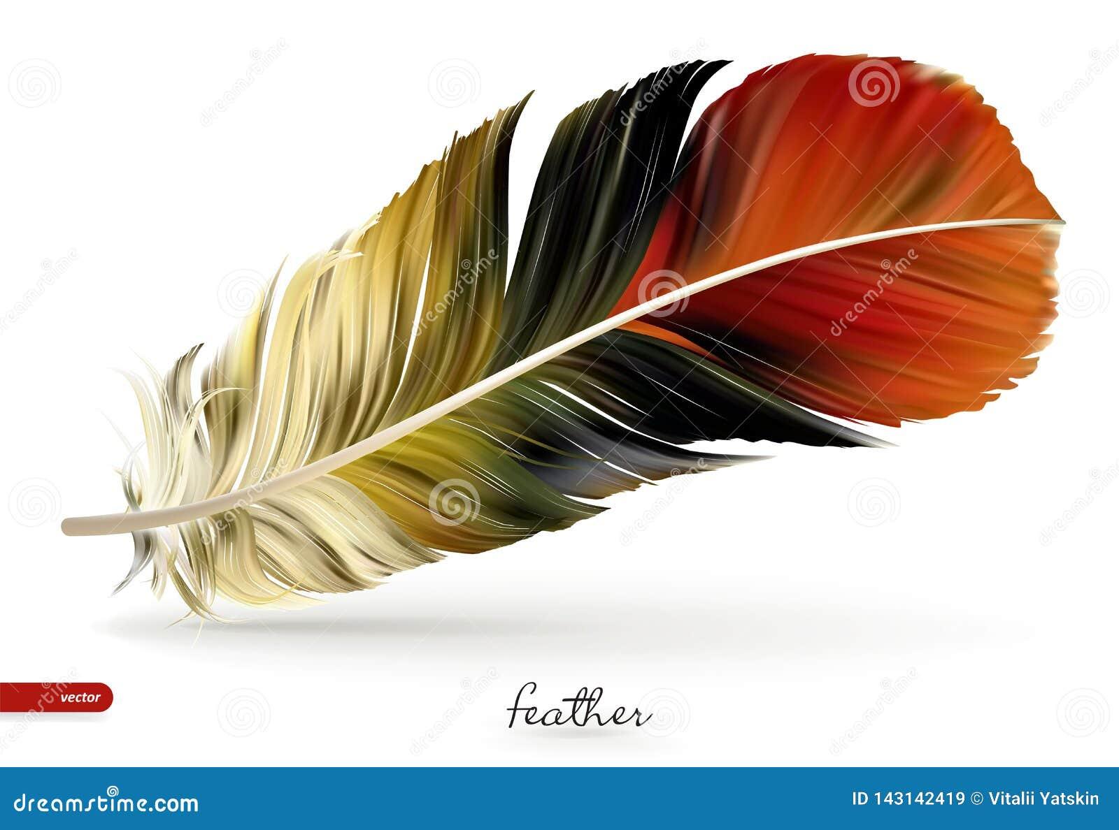 Realistische Federn - Illustration Auf weißem Hintergrund