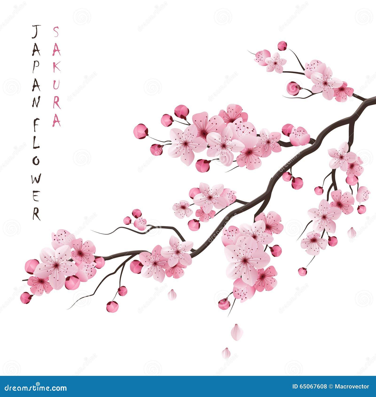 Realistische Sakura Branch
