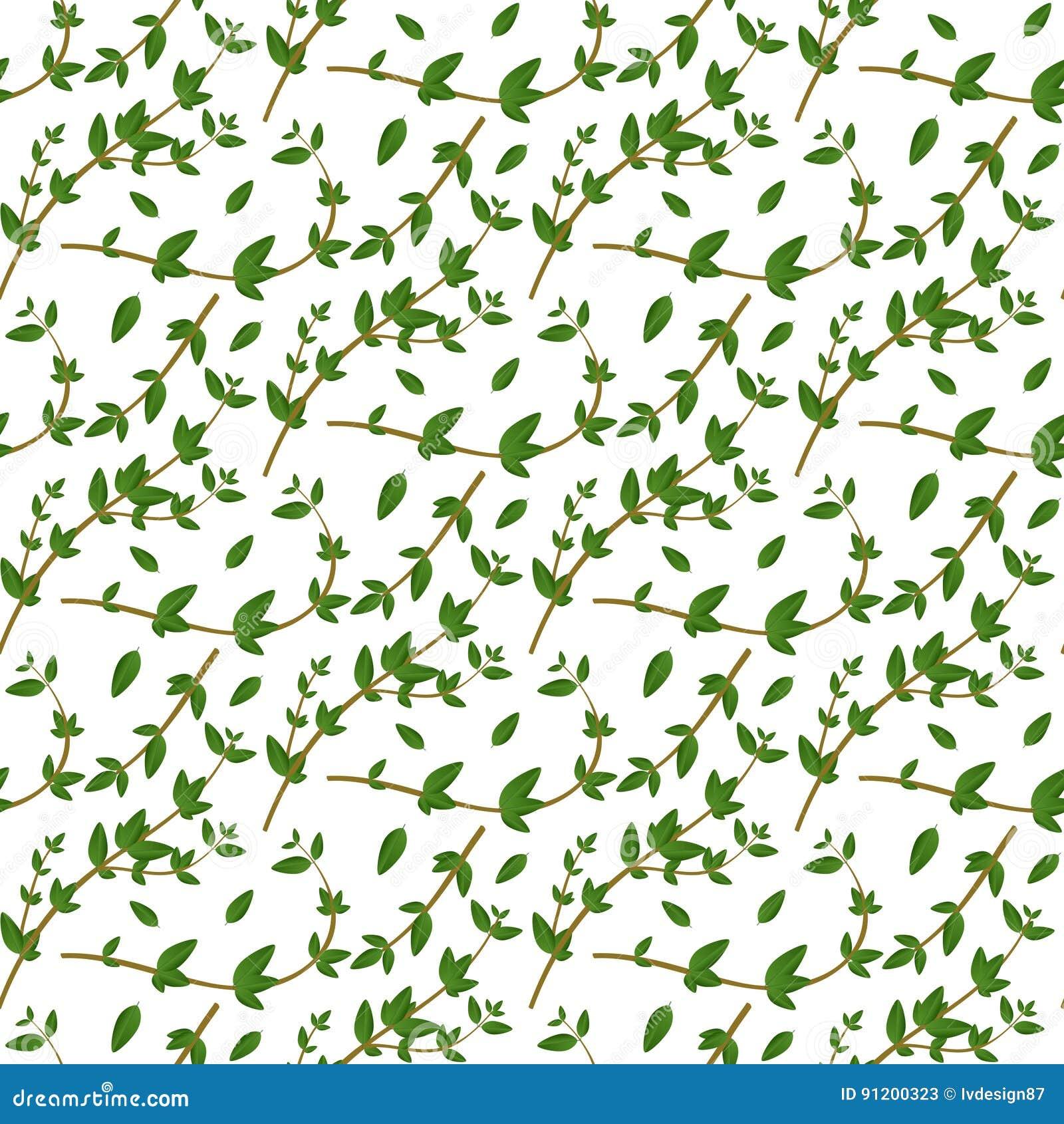Realistisches natürliches nahtloses Muster mit immergrünem Kraut Thymianniederlassung und -blätter auf weißem Hintergrund Floraar