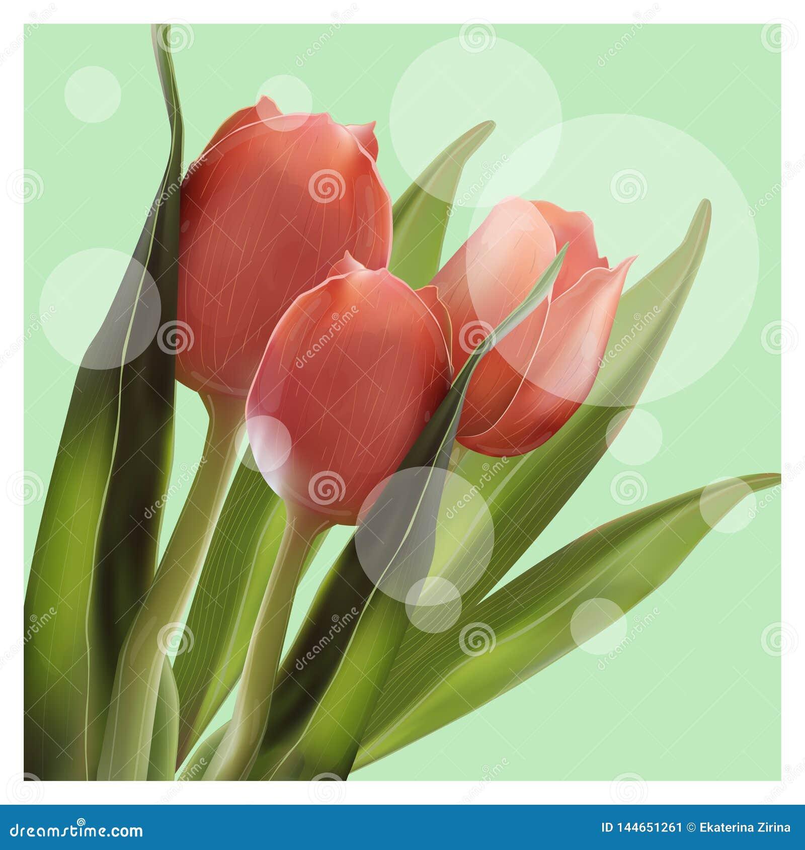 Realistyczny kwiatu tulipan Tulipan w wektorze eps 10