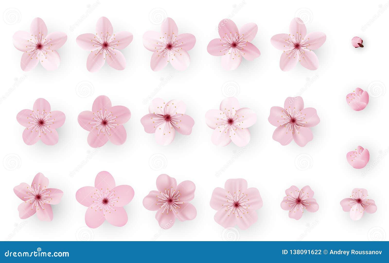 Realistyczny Sakura lub czereśniowy okwitnięcie; Japoński wiosna kwiat Sakura; Różowy Czereśniowy kwiat
