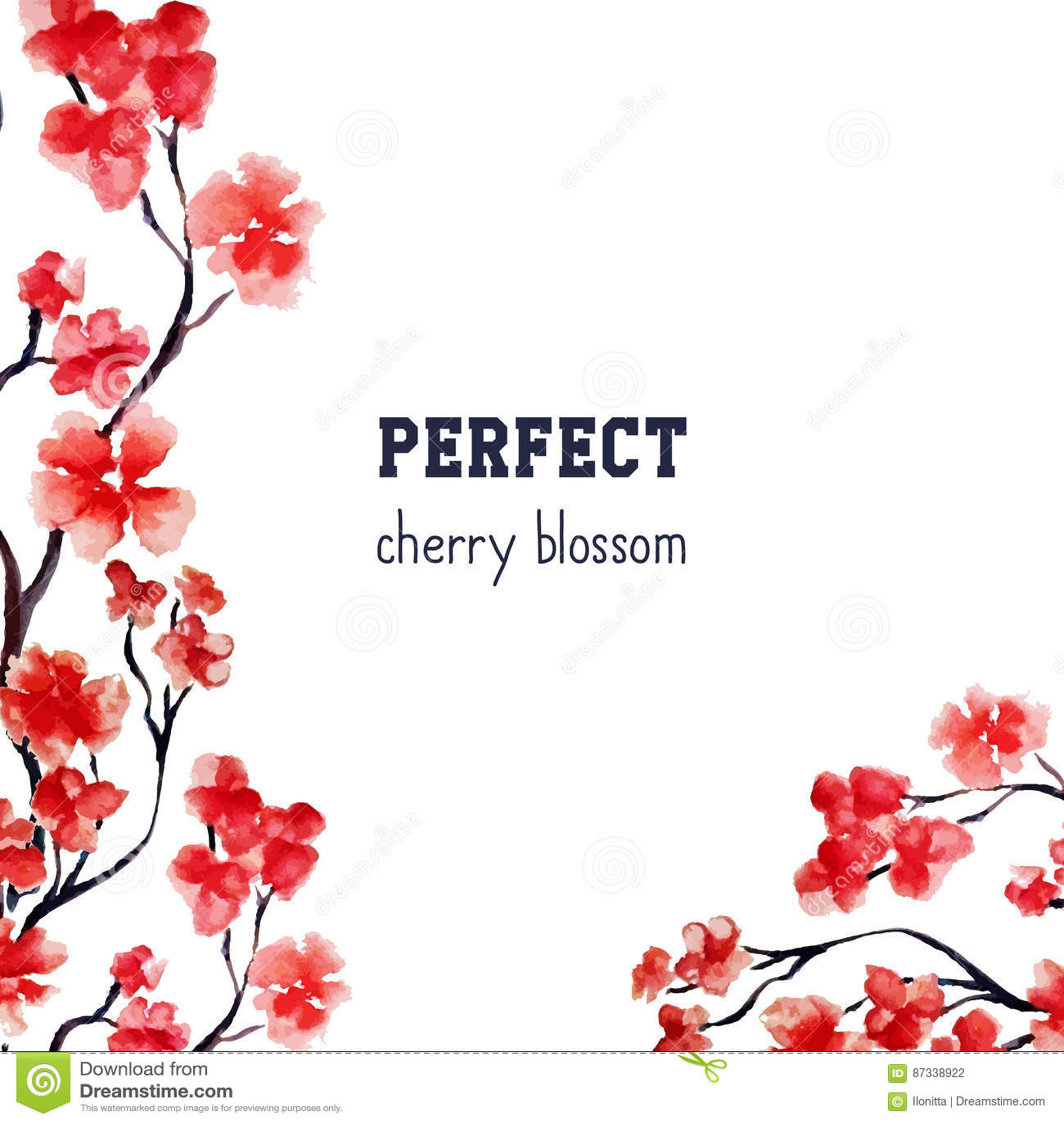 Realistyczny Sakura okwitnięcie - Japoński czerwony czereśniowy drzewo odizolowywający na białym tle Wektorowy akwarela obraz ści