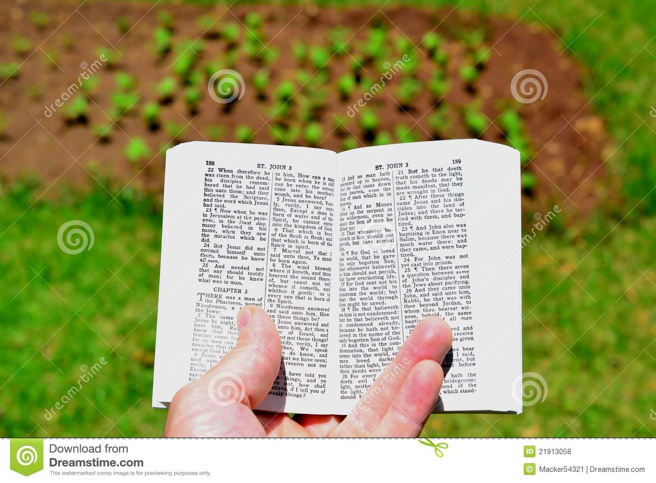 Reap what you sow  stock photo  Image of book, seedling - 21913058