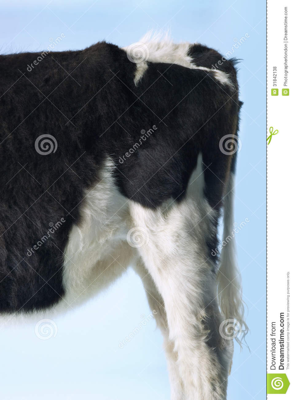 Rear End Of Cow Against Sky