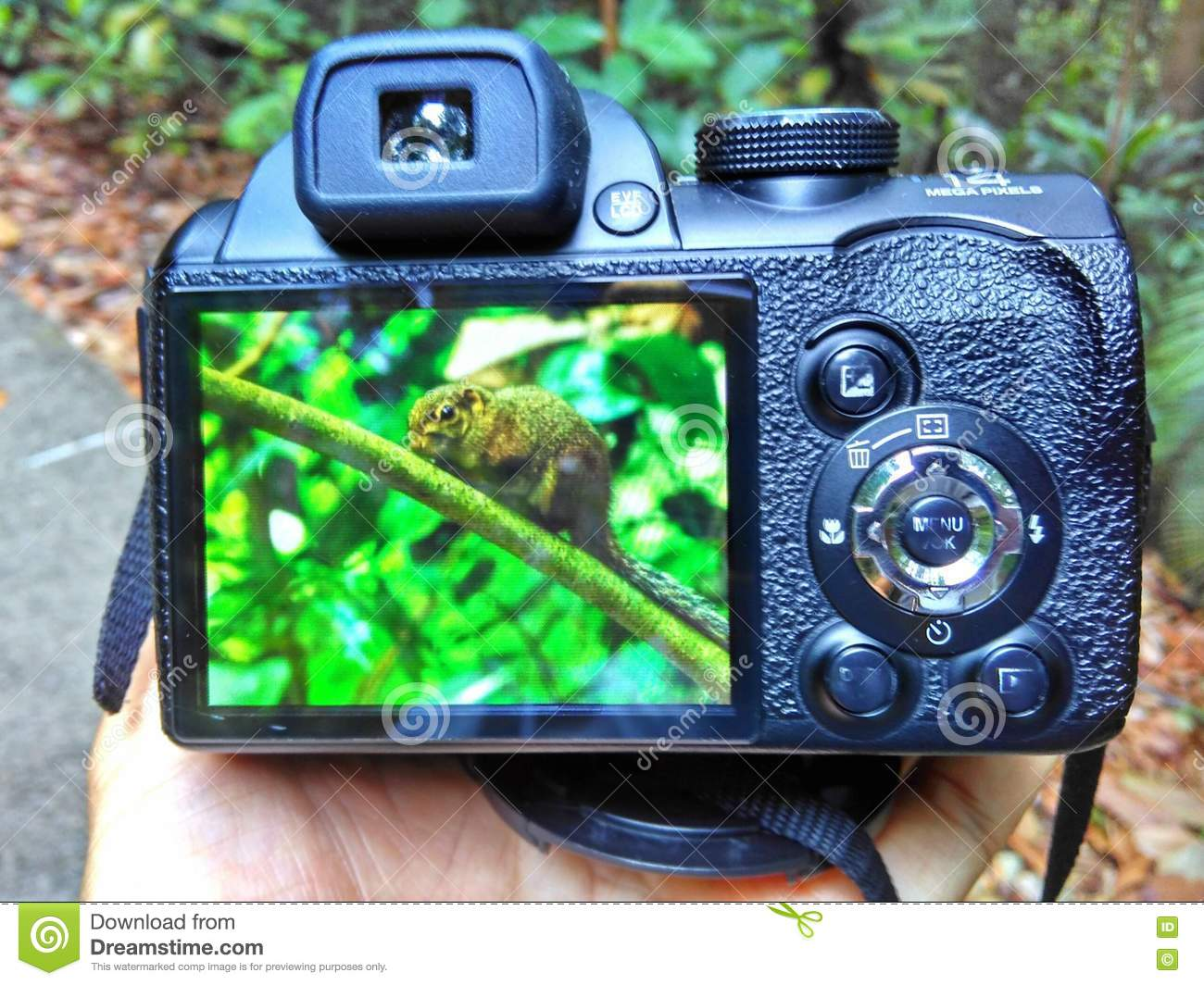 Best Compact Digital Camera For Nature Photography
