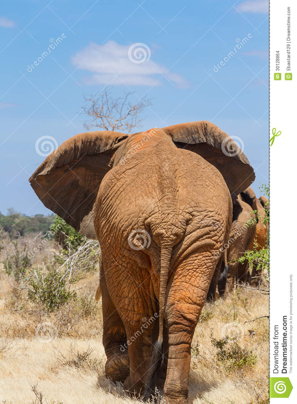 http://thumbs.dreamstime.com/z/rear-view-elephant-tsavo-kenya-30128864.jpg