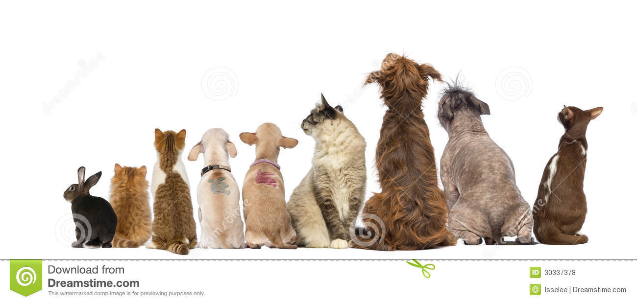 Rear View Of A Group Of Pets, Dogs, Cats, Rabbit, Sitting Royalty Free ...