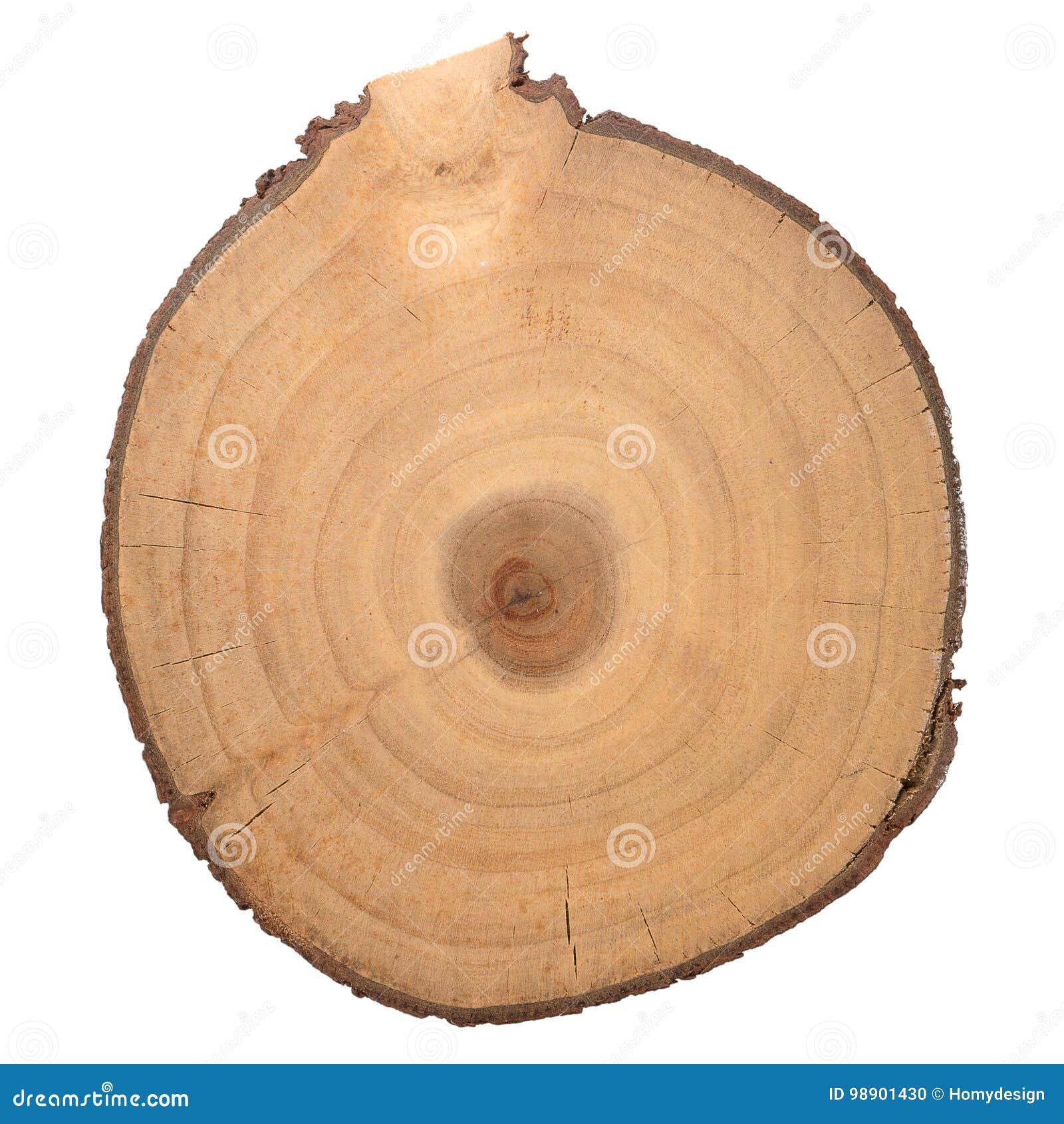 Rebanada de madera del registro
