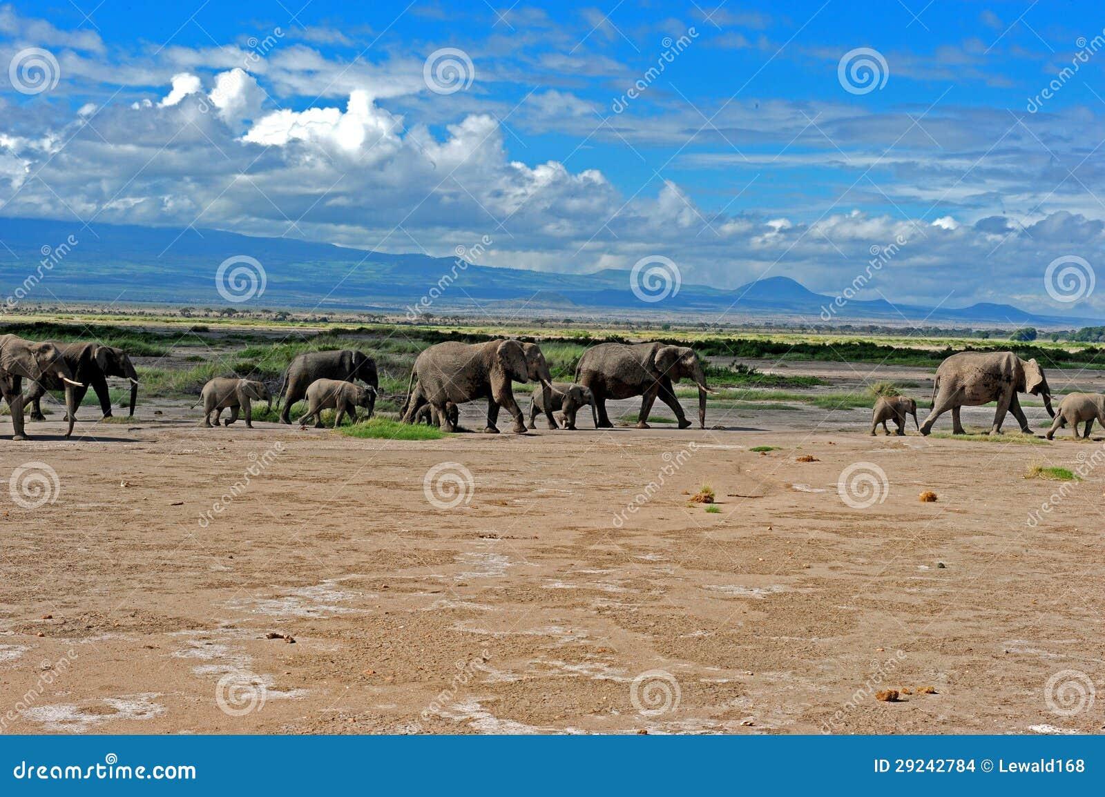 Download Rebanho do elefante foto de stock. Imagem de montanhas - 29242784