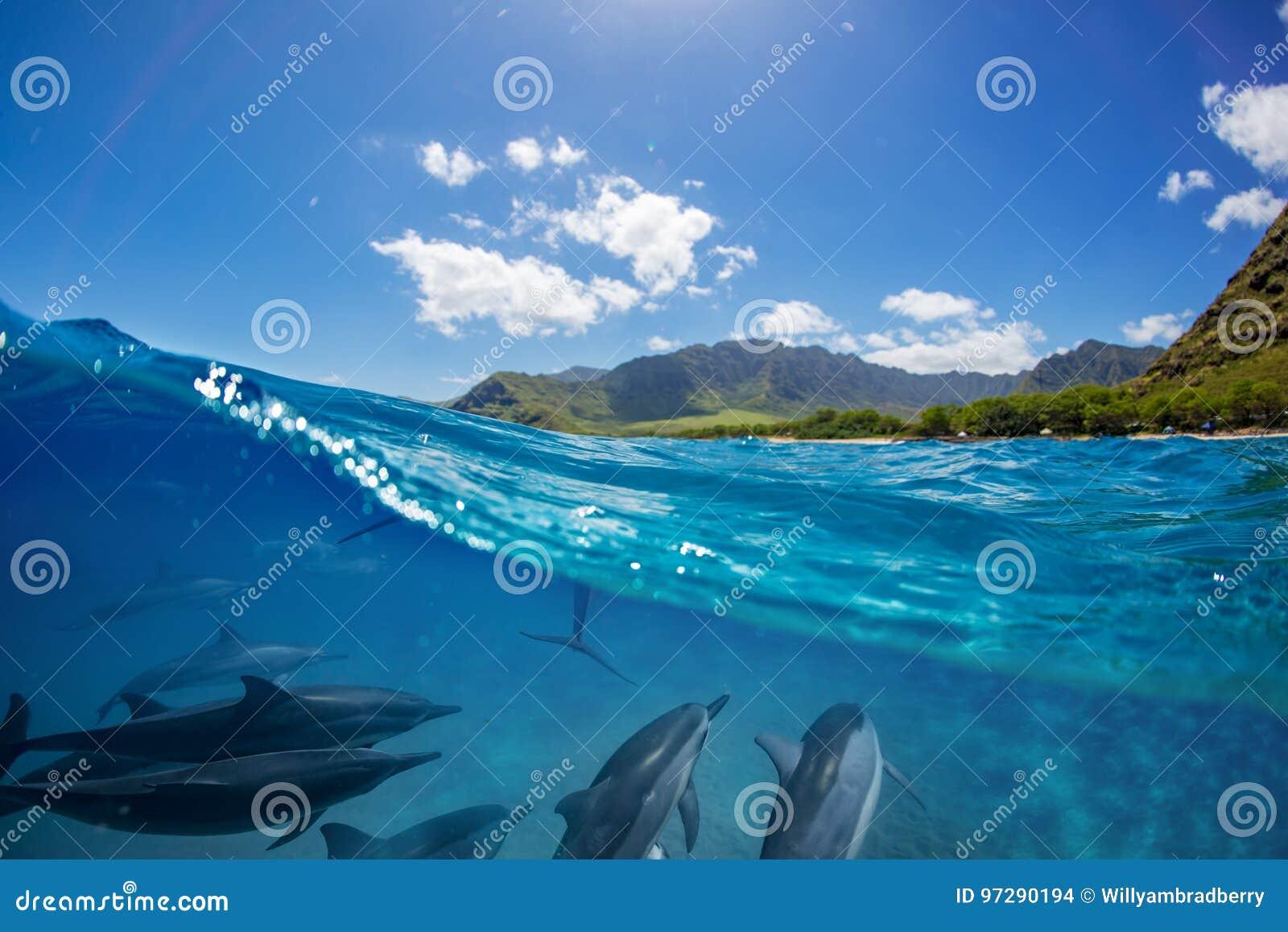 Rebanho dos golfinhos subaquáticos com paisagem sobre a linha de flutuação