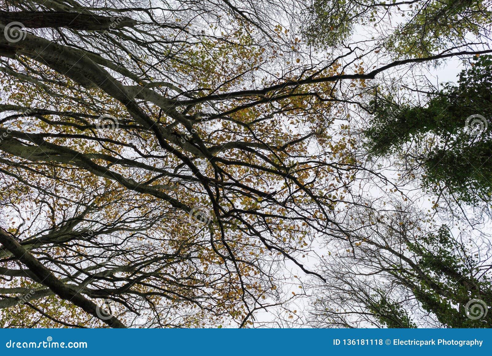 Recherchant, forêt de Friston, East Sussex, R-U