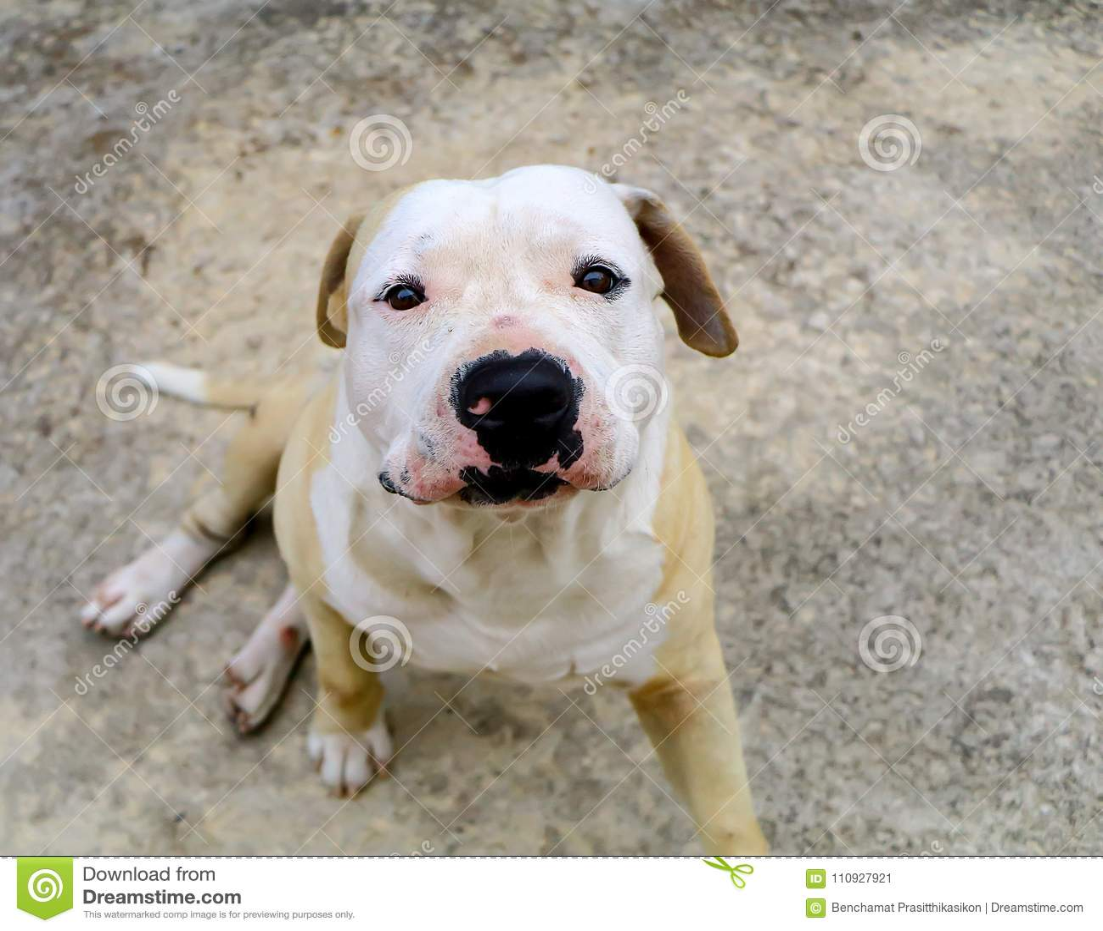Recherche affamée et heureuse de chien et de cuvette d isolement