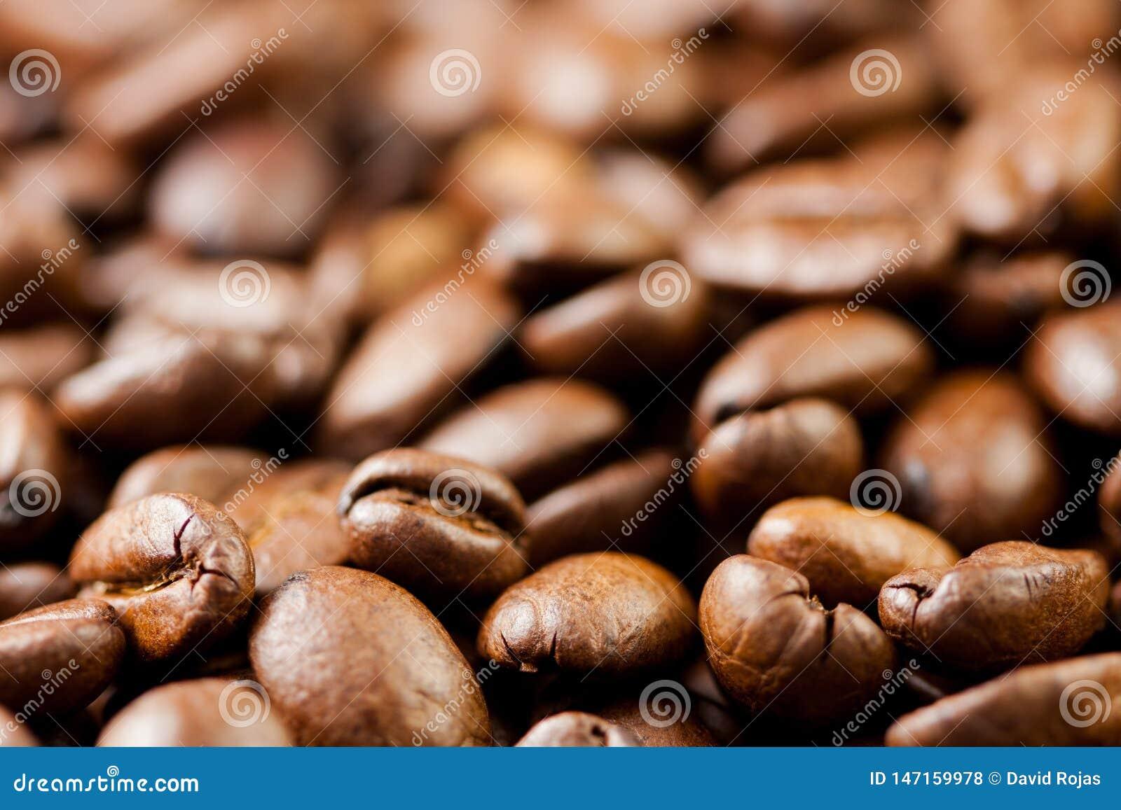 Recientemente molido habas del caf? asadas con las frutas de la planta del caf?, llenas de granos