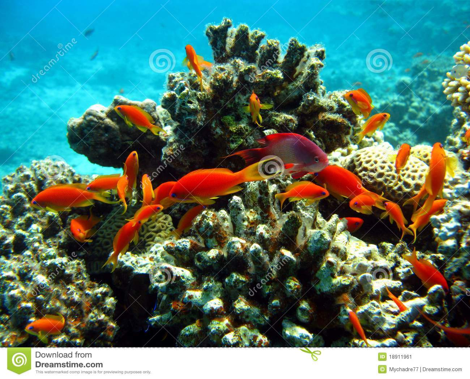 Recife coral