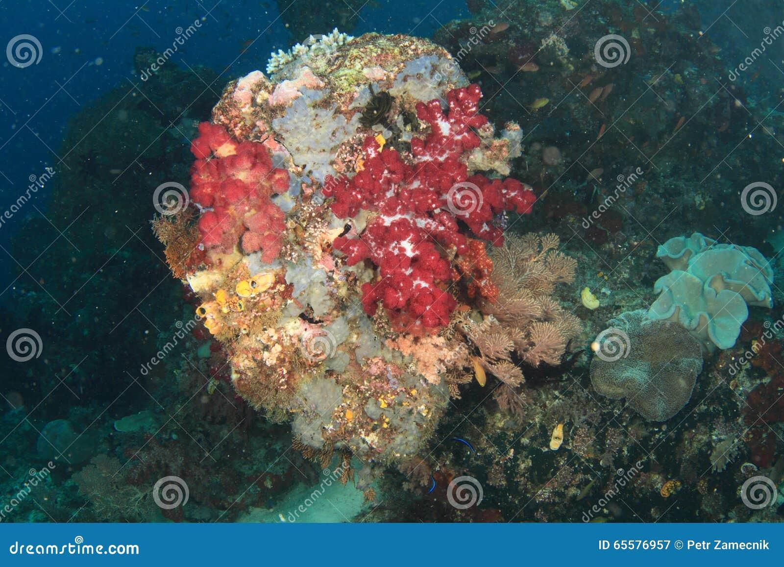 Recife coral colorido