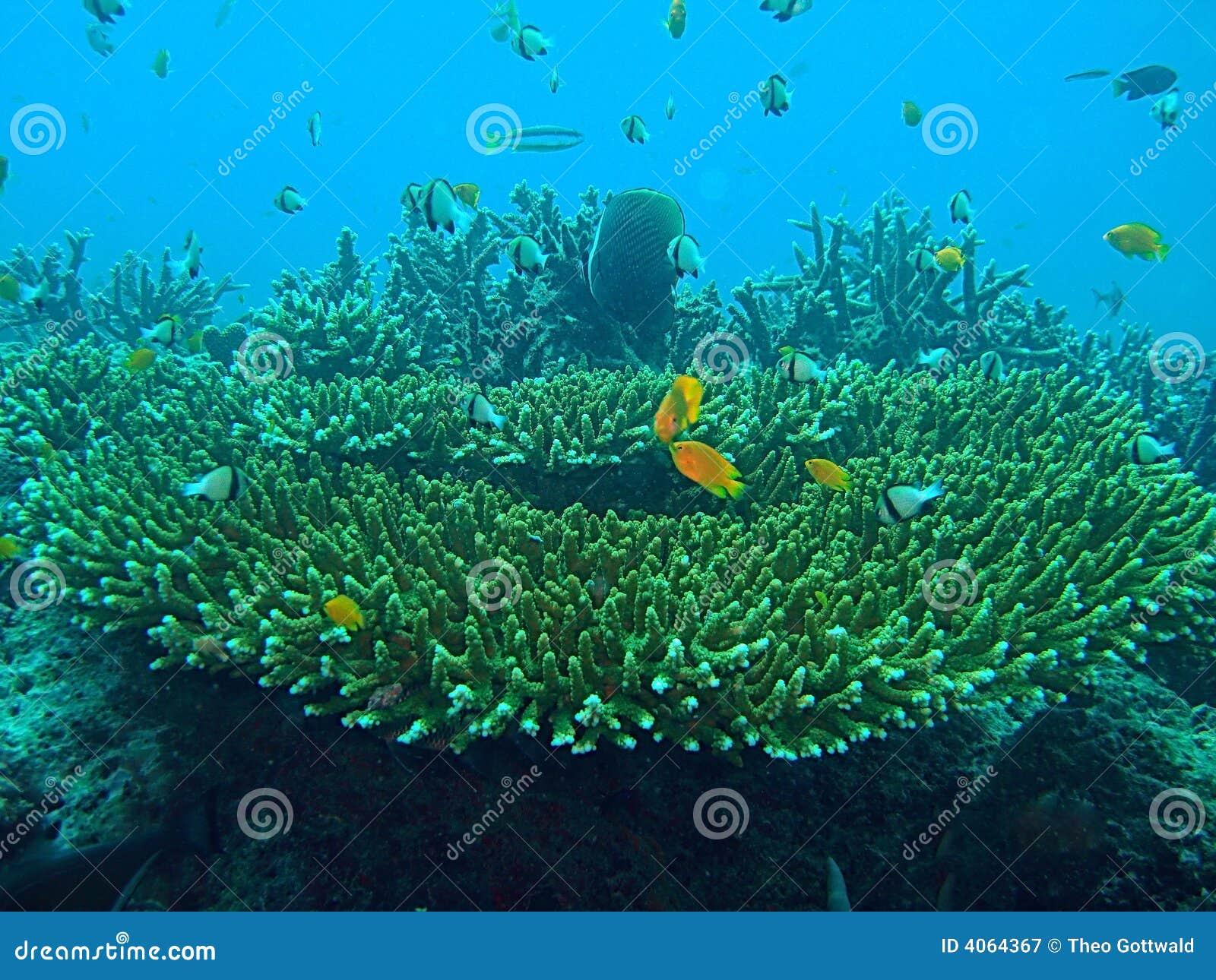 Recife coral com peixes