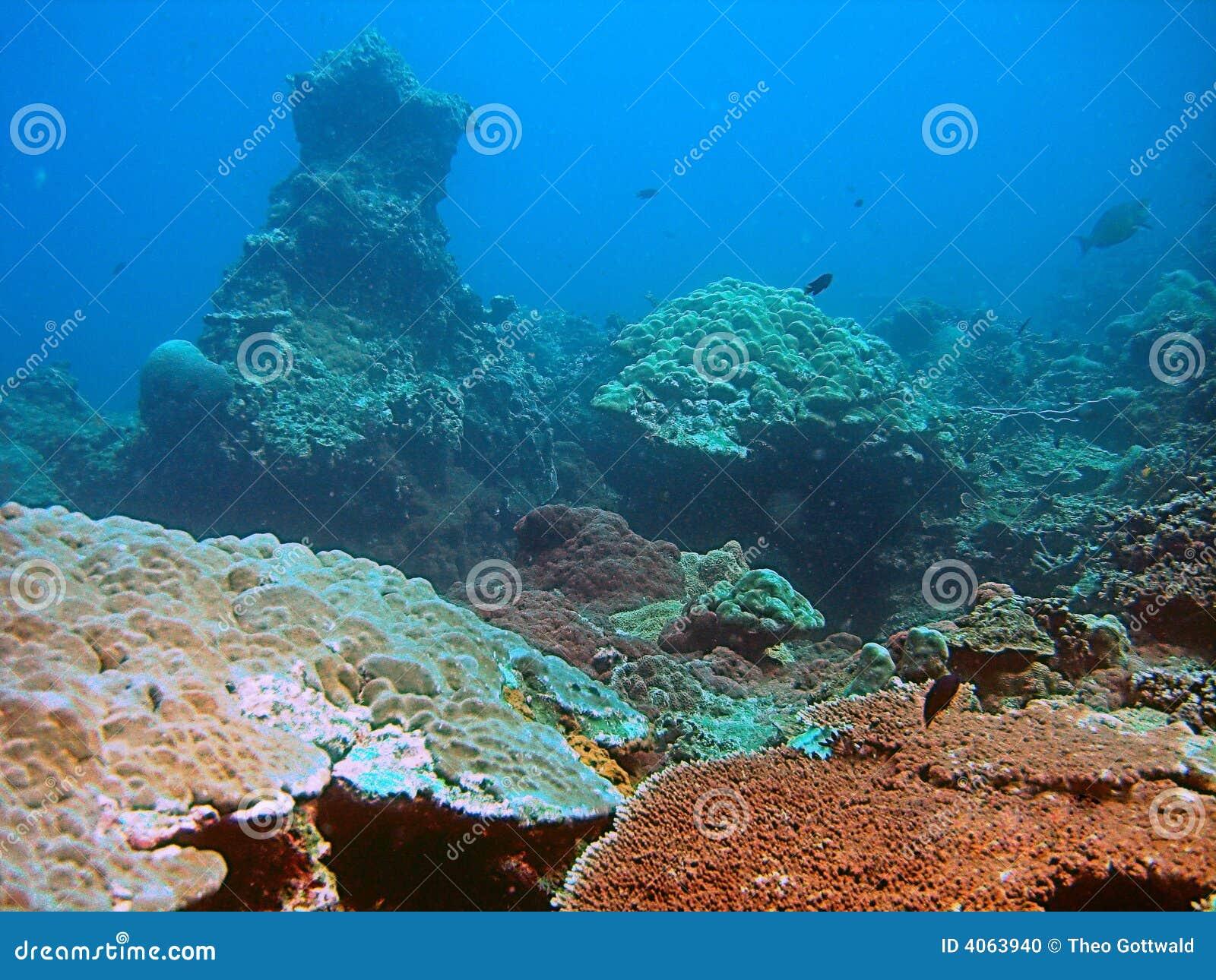 Recife coral no mar azul