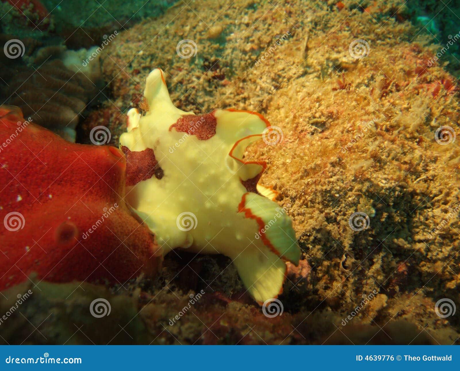 Recife coral tropical