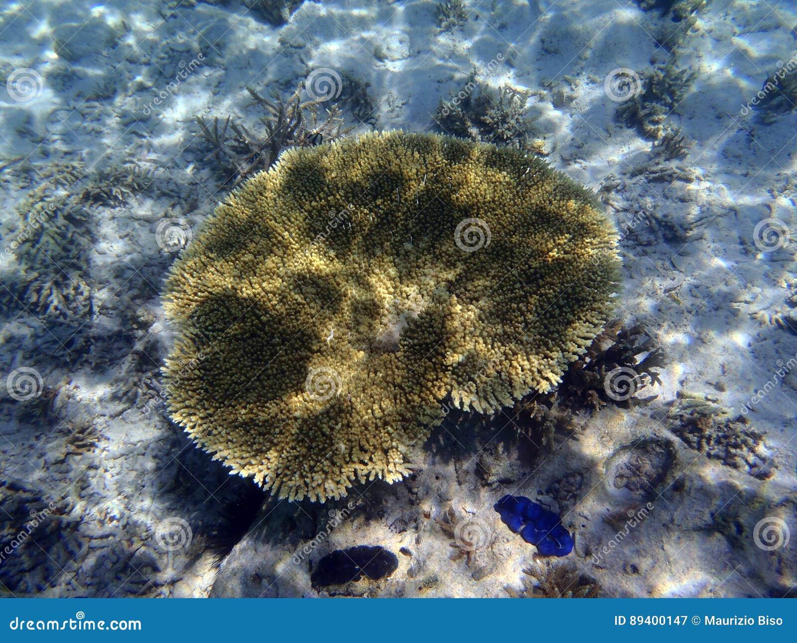 Recife de corais colorido bonito no Oceano Pacífico