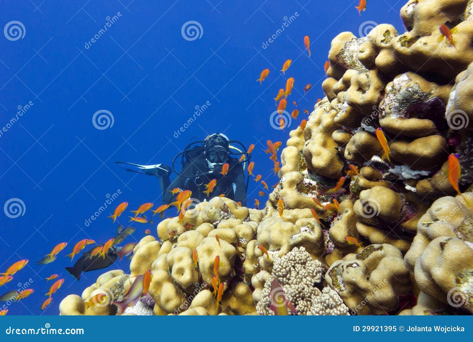 Recife de corais com corais dos porites, os anthias exóticos dos peixes e o mergulhador da menina na parte inferior do mar tropica