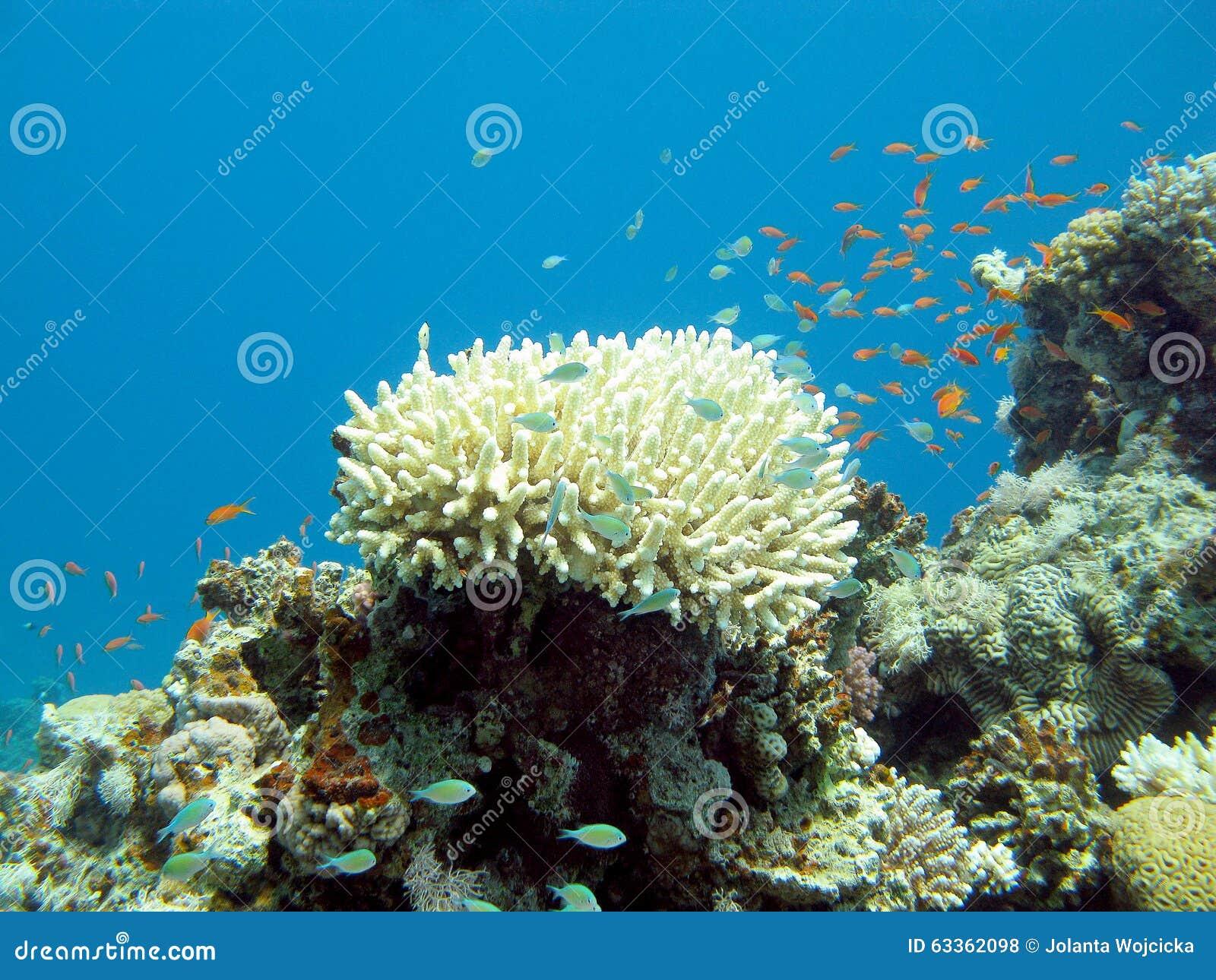 Recife de corais com os peixes exóticos no mar tropical, subaquático