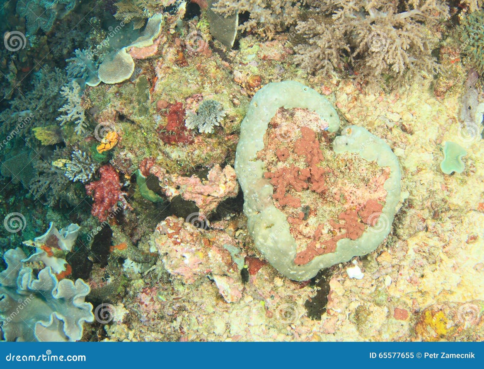 Recife de corais do coração