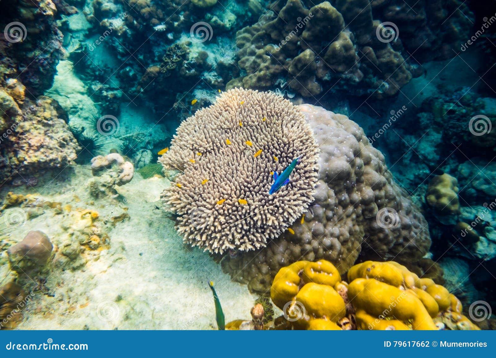 Recife de corais grande subaquático