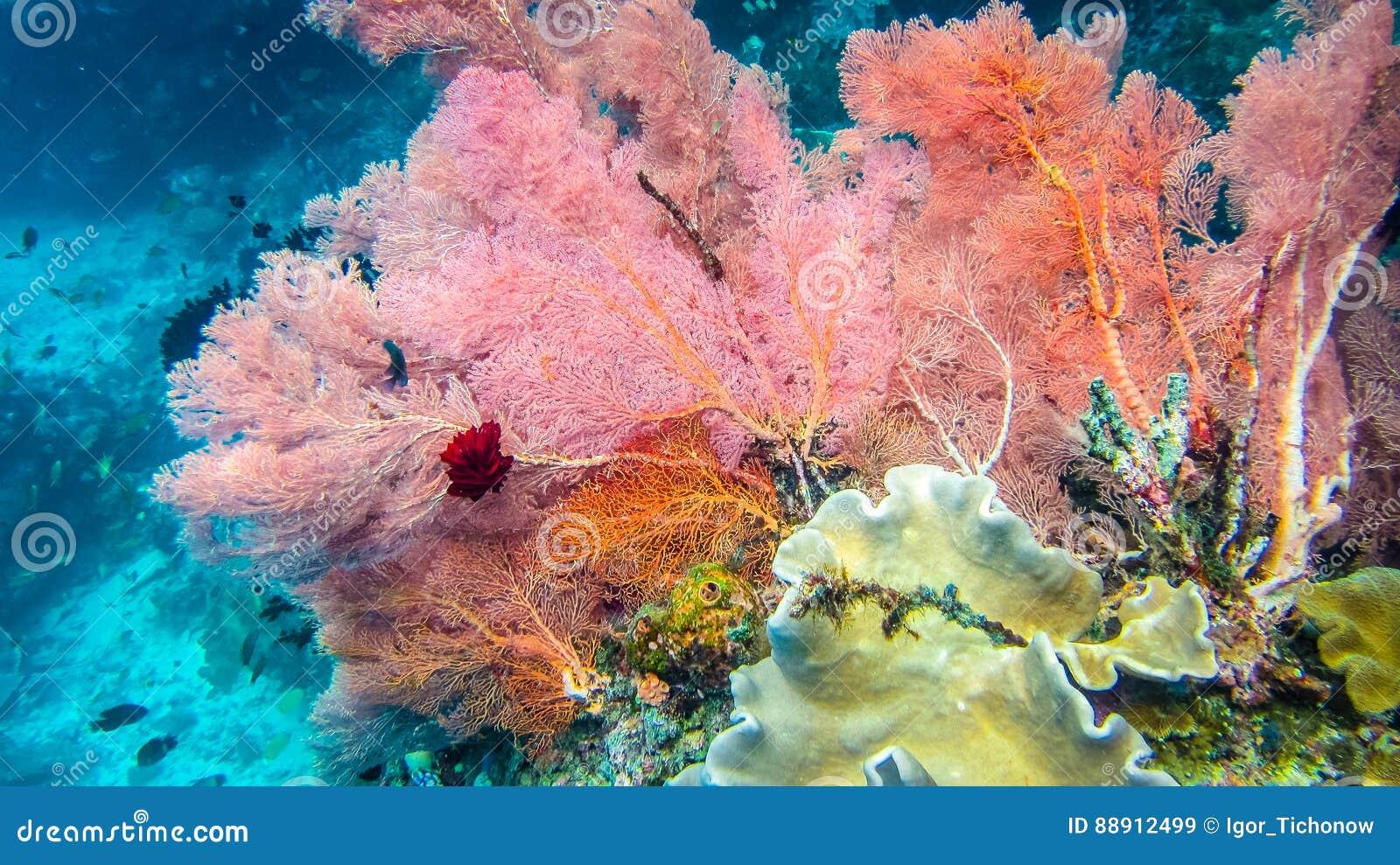 Recife de corais macio colorido lilás e mergulhador em Raja Ampat, Indonésia