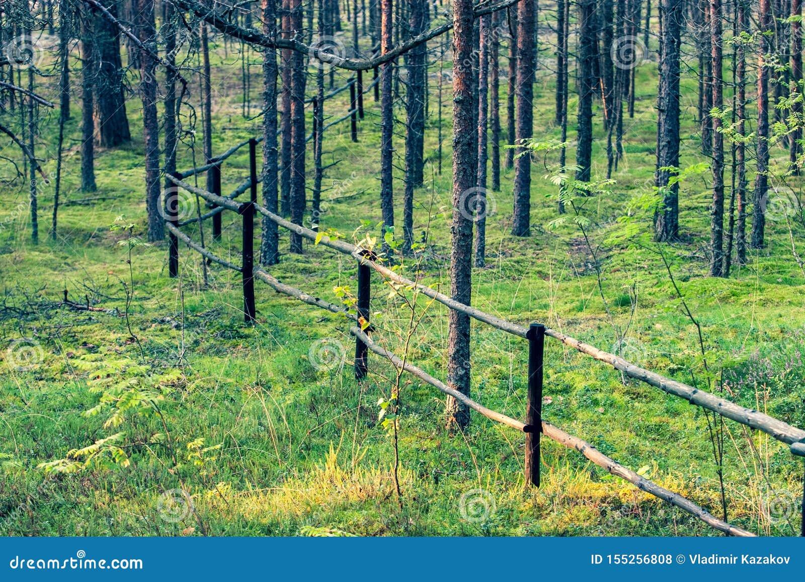 Recinto di legno dai tronchi di albero nella foresta