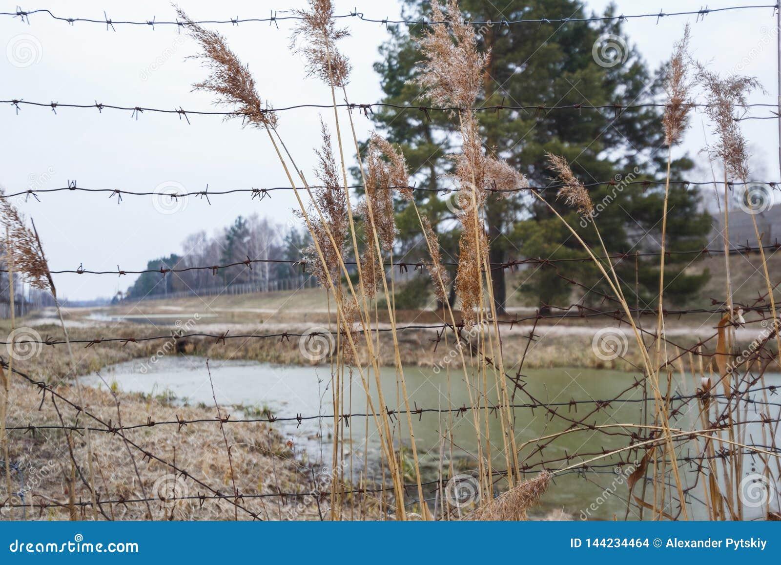 Recinzione del fiume del filo spinato Area chiusa pericolosa