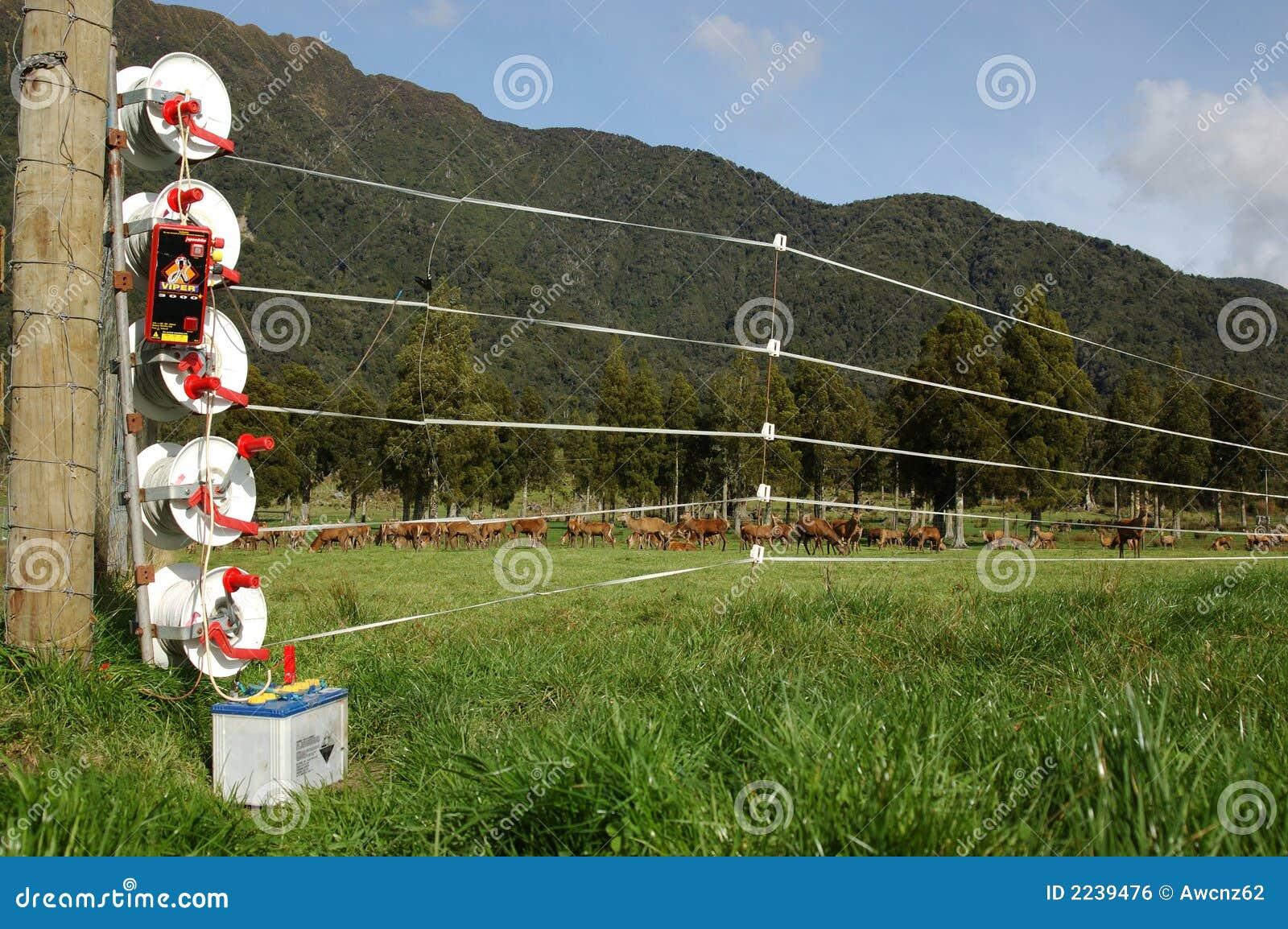 Recinzione elettrica immagine stock libera da diritti for Recinzione elettrica per cavalli