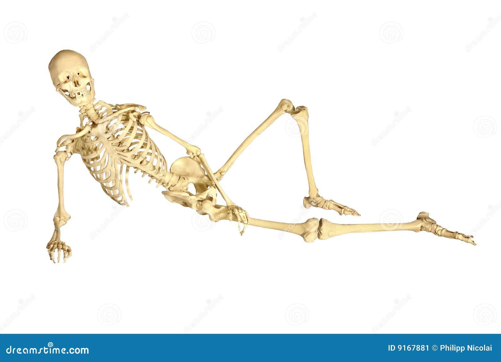 Reclinação humana do esqueleto