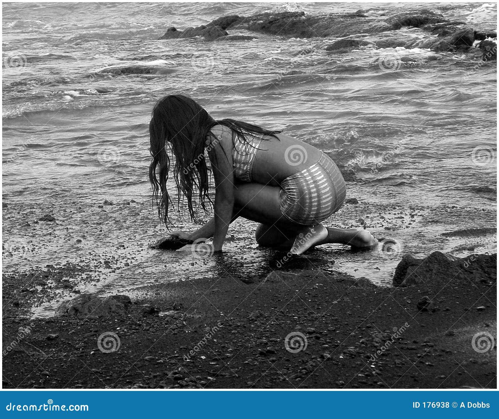 Recogida de shell