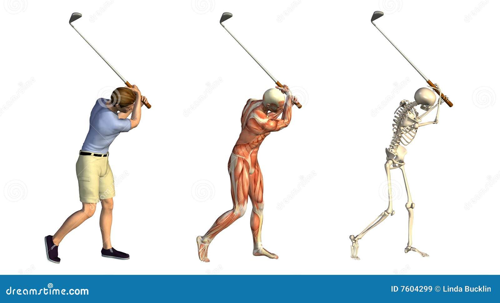 Recubrimientos Anatómicos: Oscilación Del Golf Stock de ilustración ...