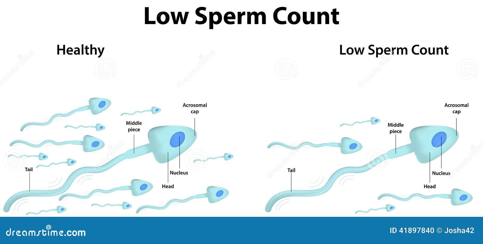 Recuento De Espermatozoides Bajo Ilustración del Vector ...